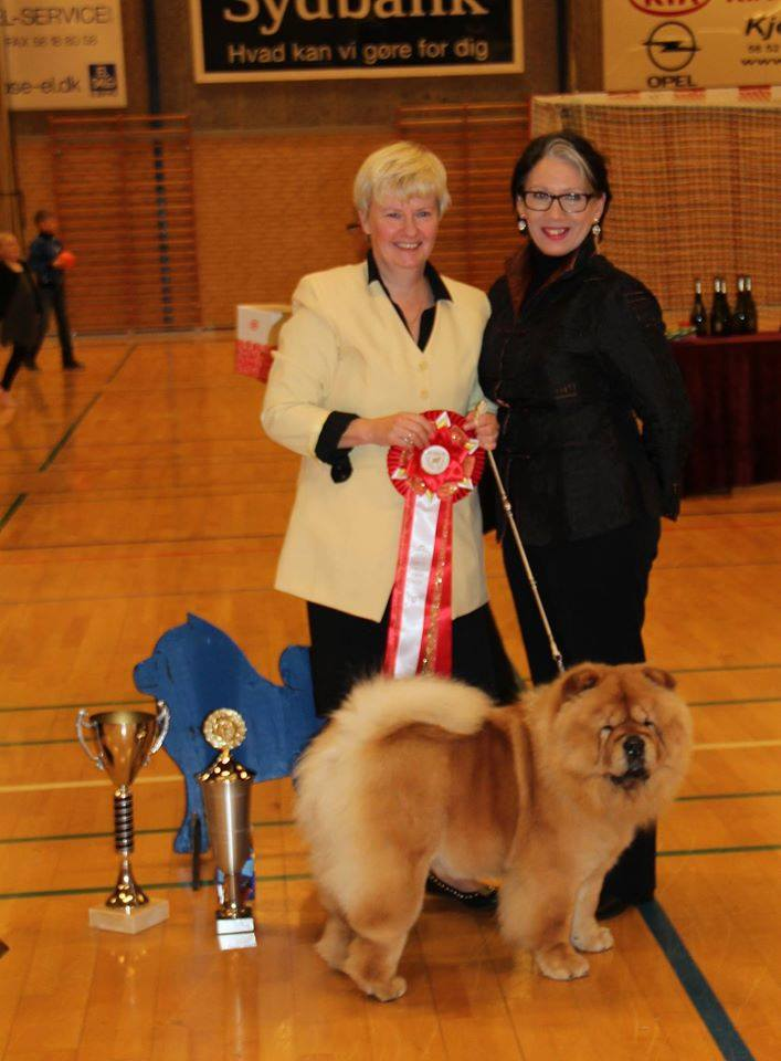 BOB + Best female 2015 CH Stagebo's Angel Of The Morning